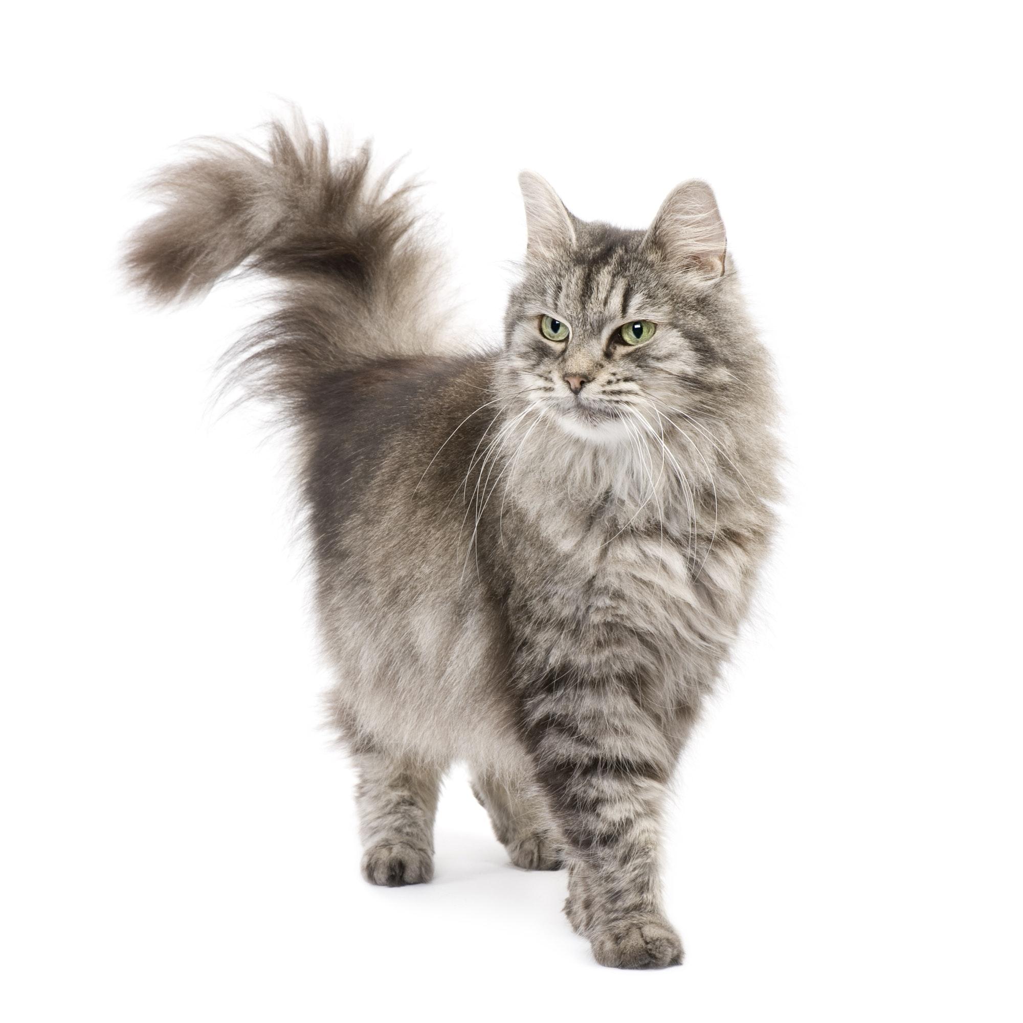 Kot z nagłówka